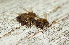 Las abejas acercan a una colmena Fotografía de archivo