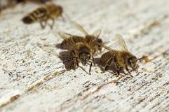 Las abejas acercan a una colmena Imagenes de archivo
