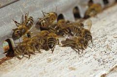 Las abejas acercan a una colmena Foto de archivo