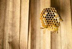 Las abejas, avispas construyen una jerarquía juntas, llenado de los huevos imagen de archivo libre de regalías