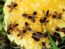 Las abejas comen la piña dulce Fotos de archivo libres de regalías