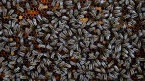 Las abejas convierten el néctar en la miel metrajes