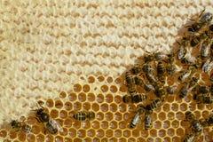 Las abejas convierten el néctar fresco en una miel deliciosa y sana Panal Fotos de archivo