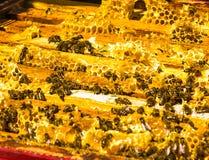 Las abejas de la miel en los peines de la cera, al aire libre Imagen de archivo