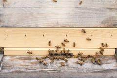 Las abejas de la miel traen el polen a la colmena Imágenes de archivo libres de regalías