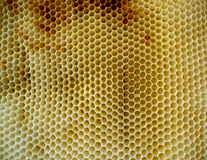 Las abejas de los animales Fotos de archivo