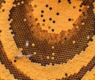 Las abejas de trabajo en el panal Foto de archivo libre de regalías