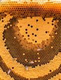 Las abejas de trabajo en el panal Imagenes de archivo
