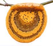 Las abejas de trabajo en el panal Imágenes de archivo libres de regalías