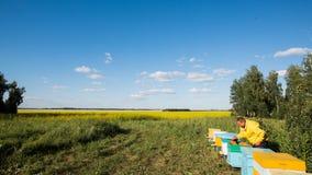 Las abejas del apicultor y del vuelo en el flor amarillean el campo Fotos de archivo