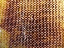 Las abejas del tema Fotos de archivo