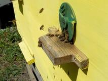 Las abejas del tema Fotografía de archivo libre de regalías