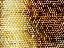 Las abejas del tema Imagen de archivo