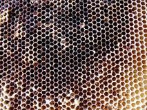 Las abejas del tema Foto de archivo libre de regalías