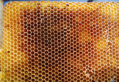 Las abejas del tema Imagen de archivo libre de regalías