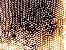 Las abejas del tema Fotos de archivo libres de regalías