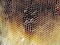 Las abejas del tema Foto de archivo