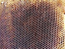 Las abejas del tema Imagenes de archivo