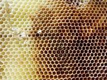 Las abejas del tema Fotografía de archivo