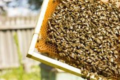 Las abejas del trabajo en abejas de la colmena convierten el néctar en la miel Foto de archivo libre de regalías