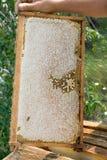 Las abejas en el panal fotos de archivo