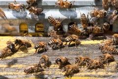 Las abejas en el primer delantero de la entrada de la colmena Foco selectivo Imágenes de archivo libres de regalías
