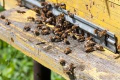 Las abejas en el primer delantero de la entrada de la colmena Foco selectivo Imagenes de archivo