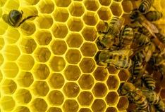 Las abejas en el trabajo Fotos de archivo libres de regalías