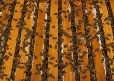 Las abejas en la colmena Imágenes de archivo libres de regalías