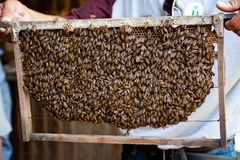 Las abejas en la colmena, miel del paraíso Colmenar en Vietnam Fotos de archivo