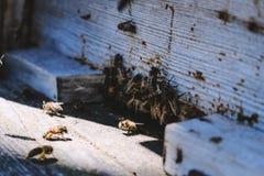 Las abejas en la entrada delantera de la colmena en primer de la primavera Apariencia vintage retra Imagen de archivo libre de regalías