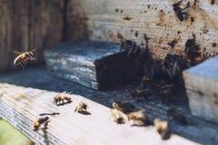 Las abejas en la entrada delantera de la colmena en primer de la primavera Apariencia vintage retra Imagen de archivo