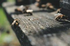Las abejas en la entrada delantera de la colmena en primer de la primavera Apariencia vintage retra Imagenes de archivo
