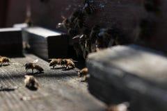 Las abejas en la entrada delantera de la colmena en primer de la primavera Apariencia vintage retra Foto de archivo libre de regalías