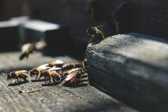 Las abejas en la entrada delantera de la colmena en primer de la primavera Apariencia vintage retra Fotos de archivo