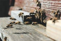 Las abejas en la entrada delantera de la colmena en primer de la primavera Apariencia vintage retra Fotografía de archivo libre de regalías
