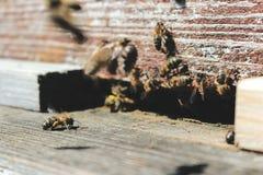 Las abejas en la entrada delantera de la colmena en primer de la primavera Apariencia vintage retra Fotos de archivo libres de regalías