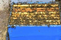 Las abejas en los peines de una división suben a una colmena Imagenes de archivo
