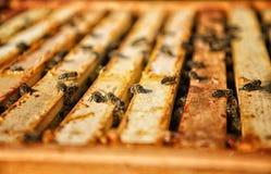Las abejas en marco de madera llenaron del peine de la miel Concepto de la apicultura Fotos de archivo libres de regalías
