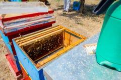 Las abejas están saliendo de la colmena abierta Imagenes de archivo