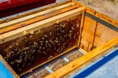Las abejas están saliendo de la colmena abierta Imagen de archivo libre de regalías