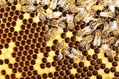 Las abejas están trabajando Fotografía de archivo