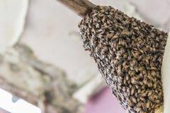 Las abejas están trabajando en una cera de abejas en una colmena de la abeja Foto de archivo