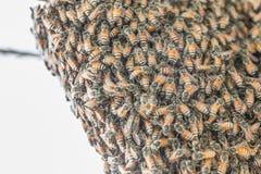 Las abejas están trabajando en una cera de abejas en una colmena de la abeja Imágenes de archivo libres de regalías