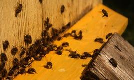Las abejas están viniendo a la colmena Imagenes de archivo
