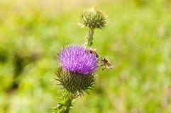 Las abejas están volando para trabajar Fotos de archivo libres de regalías