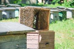 Las abejas pululan recogido a la caja especial del colmenar usada para el transporte Fotos de archivo libres de regalías