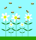 Las abejas que polinizan la manzanilla florecen diseño plano Foto de archivo libre de regalías
