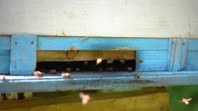 Las abejas recogen el néctar en verano y lo llevan a la colmena almacen de metraje de vídeo