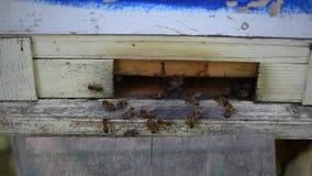 Las abejas recogen el néctar en verano y lo llevan a la colmena almacen de video